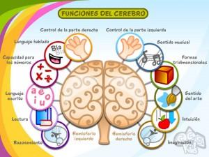 cerebro y la estimulacion